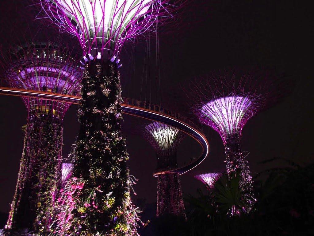 Los Supertrees de noche con su espectáculares luces. | Bitácoras Viajeras