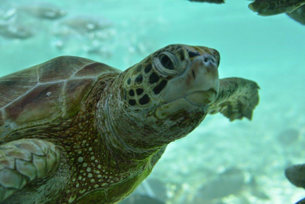 Tortuga Gigante en Bora Bora | Bitácoras Viajeras